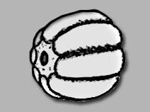 Бусина в форме дыни (melon)
